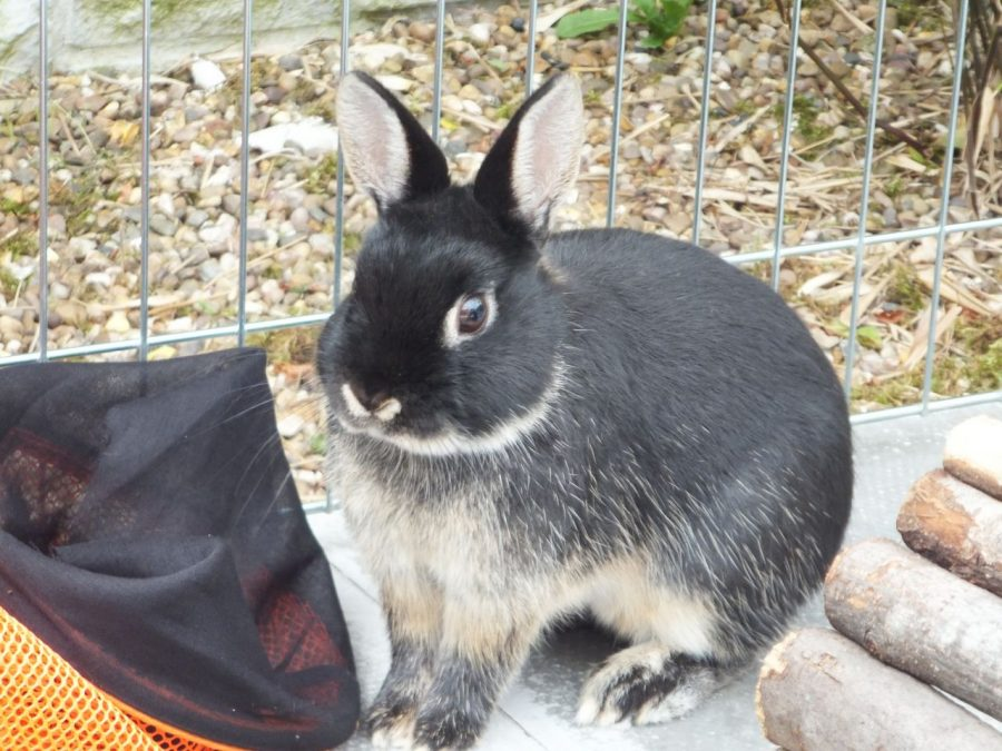 Q and A with Cedar the Rabbit