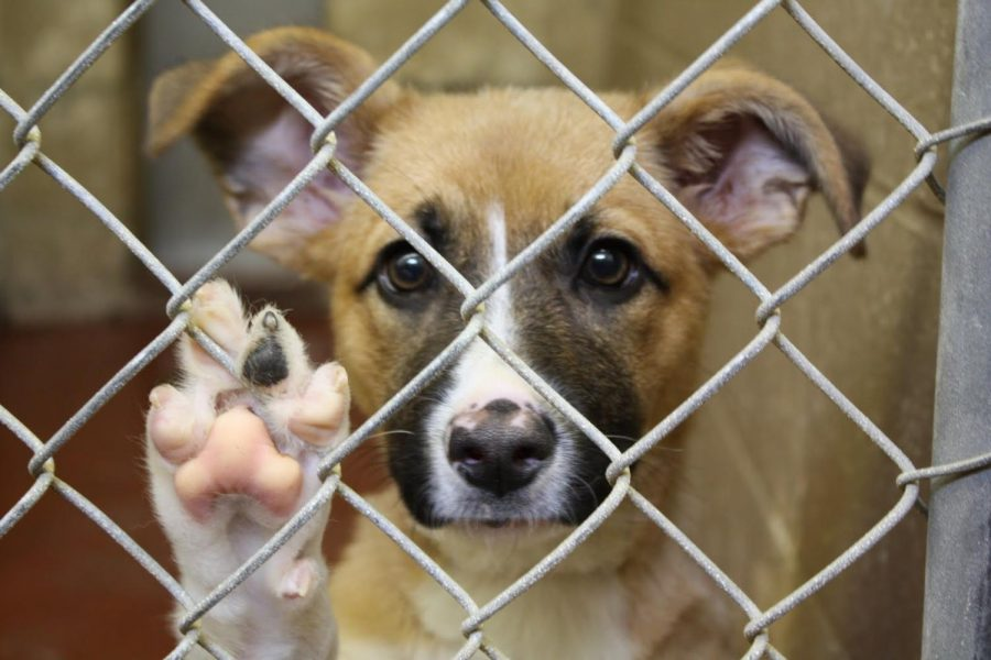 7 Things You Should Know About Animal Shelters