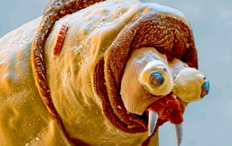 13 Things That Look Insane Under a Microscope (Part One)