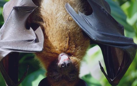 Bat Safety