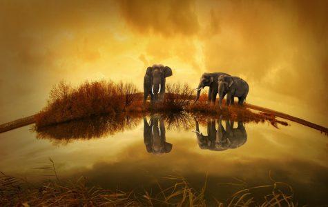 Britain Proposing Ivory Ban