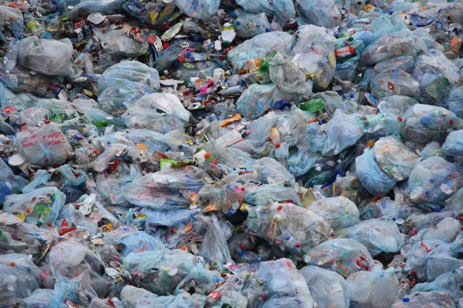 Plastic+is+Killing+our+World