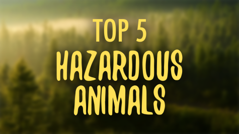 Top 5 Most Hazardous Animals
