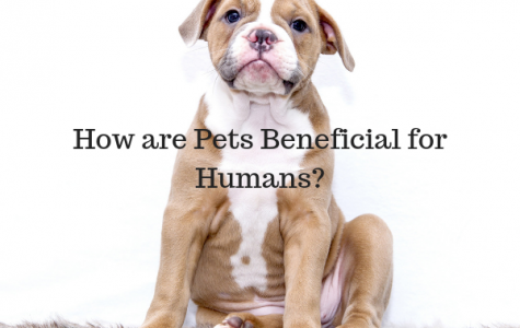 How are Pets Beneficial for Humans?