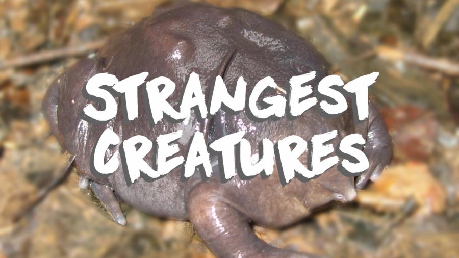 Ten Of The World's Most Strange Creatures
