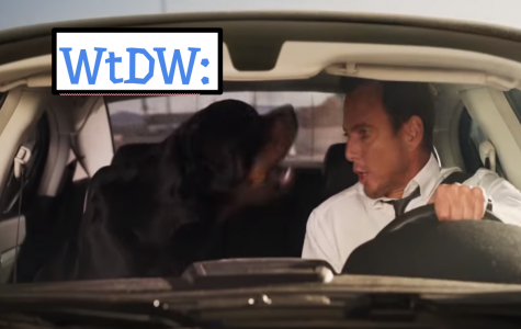 What's the Deal With Showdogs?