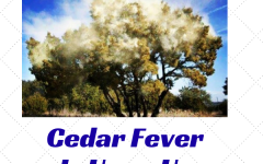 Cedar Fever Is Upon Us