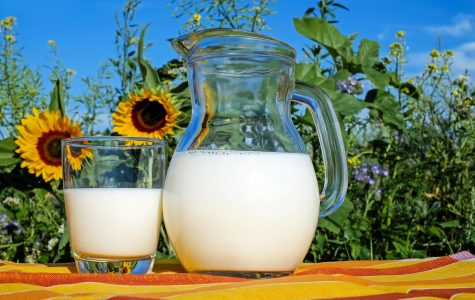 Milk : Good or Bad?