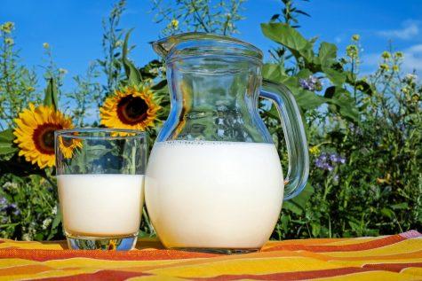 Milk : Good or Bad?