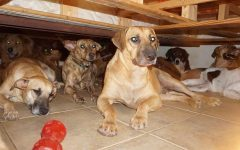 Full House! – Rescuing nearly a 100 dogs from Dorian