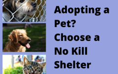 Adopting a Pet? Choose a No Kill Shelter
