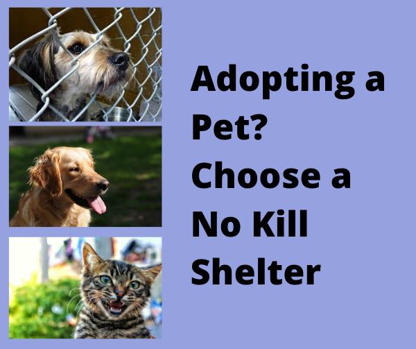 OPINION: Adopting a Pet? Choose a No Kill Shelter