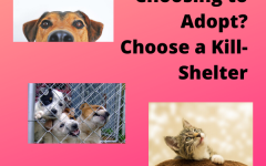 Kill Shelters Need Our Support
