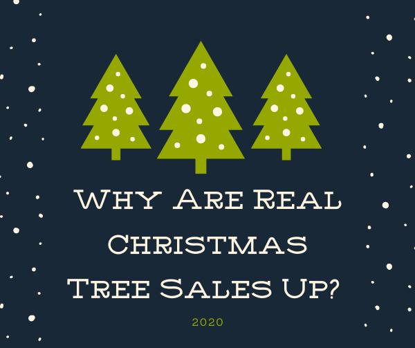 Pandemic Makes Christmas Tree Sales Skyrocket