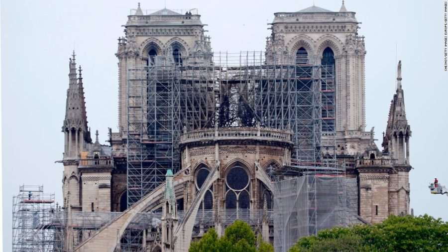 Rebuilding Notre Dame One Tree at a Time